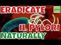 H  PYLORI How to Completely Eradicate Them Off Your Gut