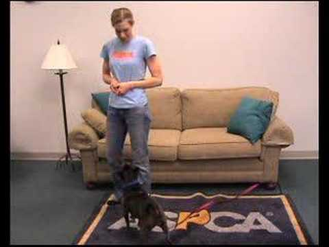 Training Your Dog Not to Jump
