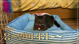 여동생에게 침대를 빼앗겨버린 토노!!/妹にベッドを取られ…
