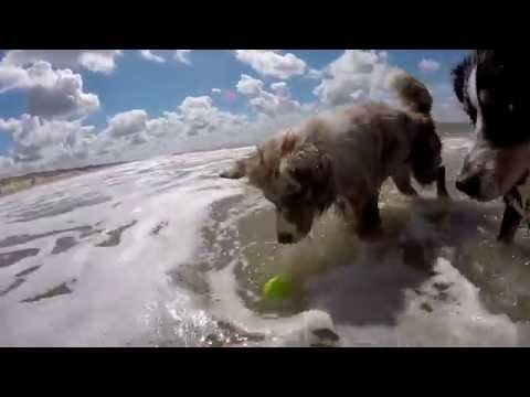 Beach Day | Australian Shepherd Adventure