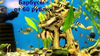 Аквариумные рыбки в зооцентре «Джунгли»