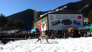 Artvin Şavşat Veliköy Kar Üstü Karakucak Güreşleri