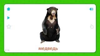 Медведь - Карточки Для Детей - Дикие Животные - Карточки Домана