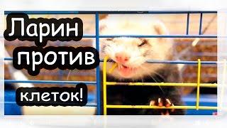 ЛАРИН ПРОТИВ клеток )