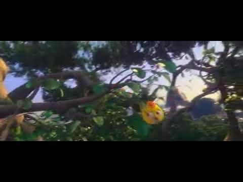 Teri Akhiyon Ka Waar Jaise Sher Ka Shikar :: Bird Animation