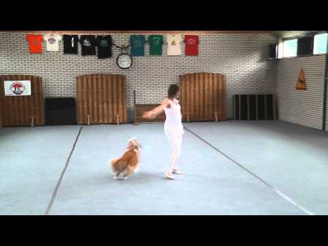 Chanti en Flame, dog dance video wedstrijd