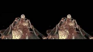 3D stereoscopy -  CT scan exploration of ancient egyptian mummies - IMA Solutions - Siggraph 2009
