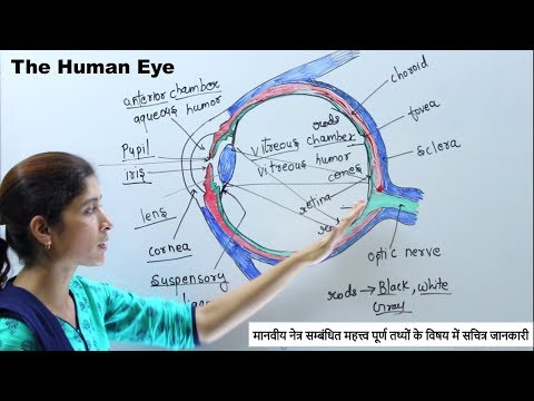 Gk (Biology) - Structure and working of Human Eye (मानव नेत्र) - नेत्र की बनावट & संरचना