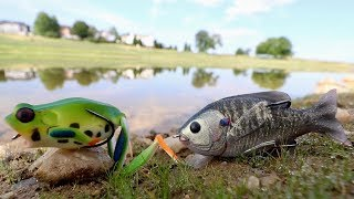 Fishing ULTRA-Lifelike Lures for TRICKY Summer Bass!!!