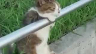 Кот в несебе!!!