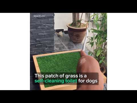 Self-Cleaning Toilet for Dogs