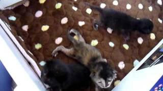 保護した子猫3匹:7日目