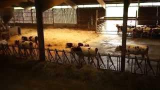 Version 0.9 Le Lait LA Bio Fermière de la ferme de la Meix