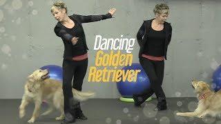 Dancing Golden Retriever Dog Gwen Verdon Amazes With Moves