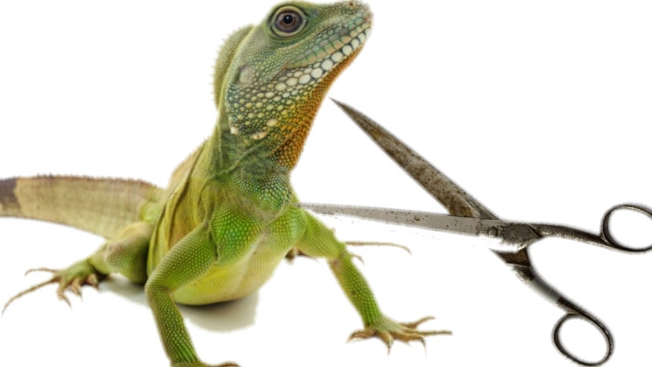 Reptile People Are Just Like Hairdressers ...!