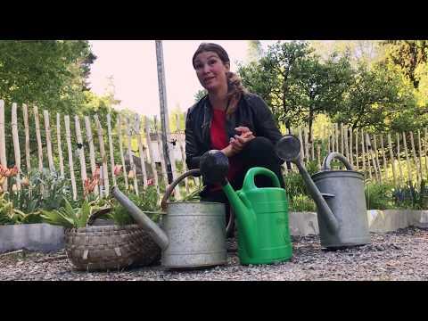 Gödselvatten - gör 3 gratis näringslösningar gödslar i din trädgård . Odla grönsaker och blommor
