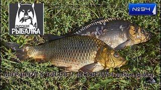 #Стрим В ЧЕСТЬ 2020 МАРАФОН 8 ЧАСОВ #РУССКАЯ РЫБАЛКА 4 порыбачим №94*(О.МЕДВЕЖКА ловим рыбку  )