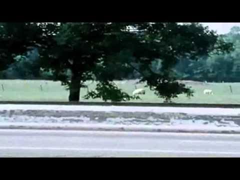 Kraftwerk - Autobahn (Official Music Video) HD