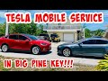Tesla Mobile Service Comes To Big Pine Key To See Lucky!!!