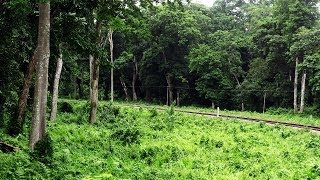 FULL JOURNEY Through The Unexplored Paradise of BENGAL!!! The HEAVENLY Beautiful DOOARS..