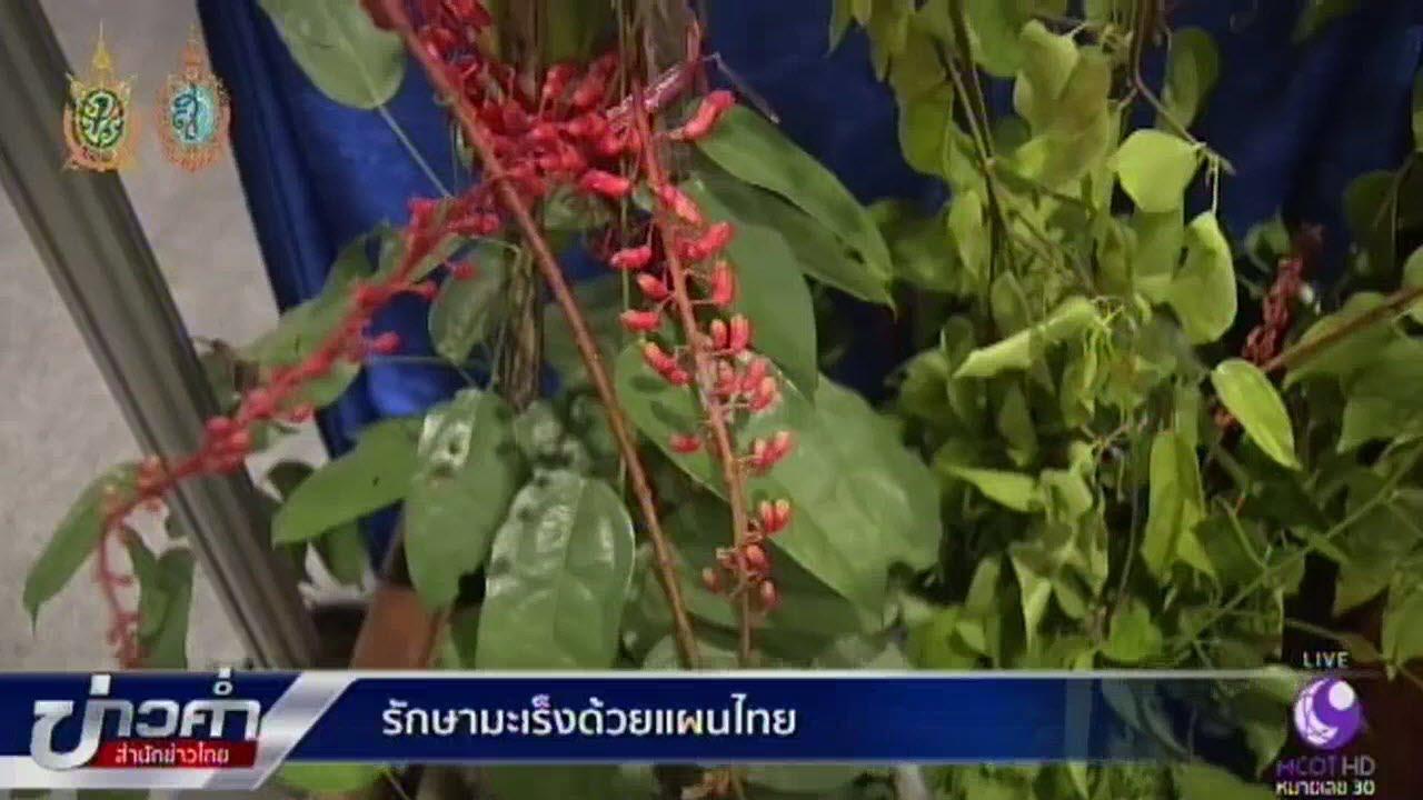 รักษามะเร็งด้วยแผนไทย