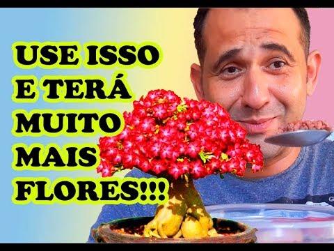ROSA DO DESERTO - USE ISSO E DEIXE SUAS FLORES MAIS BONITAS! 😍 🌺