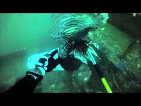 Blue Water Escape Lion Fish Round Up Pt 1