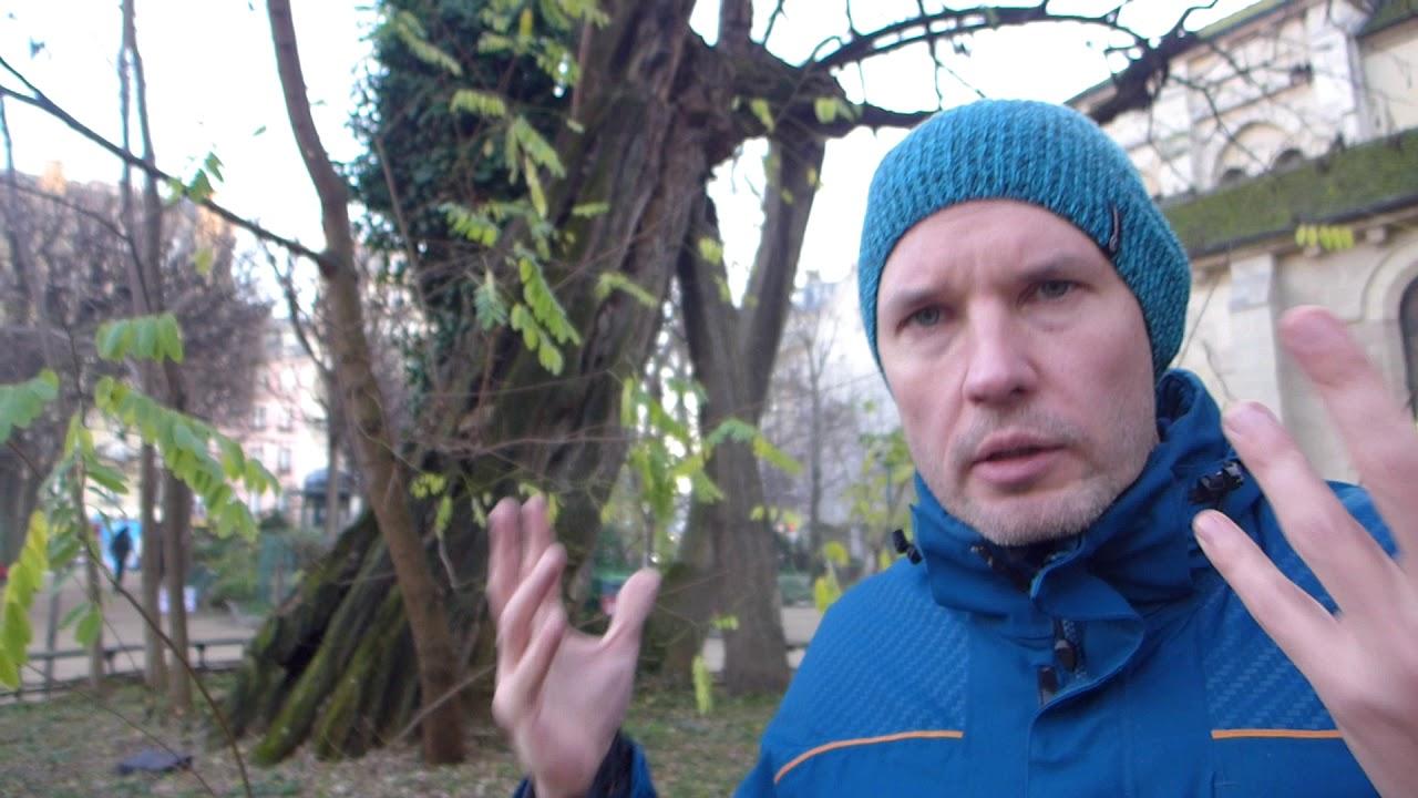Зачем деревья в городе? Зелёные жители, летописцы и хранители.