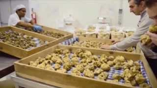 Why Truffles Are So Expensive