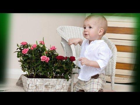 Комнатные растения для детской! Выбираем полезные растения для детской комнаты!