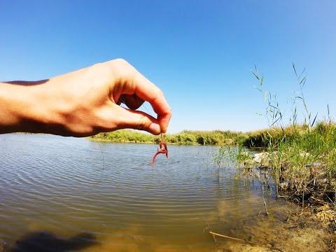 как правильно насаживать червя при ловле леща