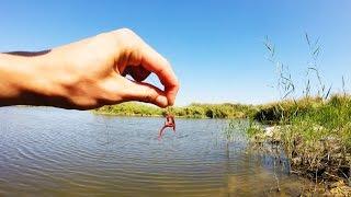 Насаживание червя на крючок.Рыбалка.Fishing