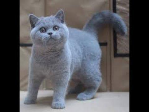 En Pahalı 10 Kedi