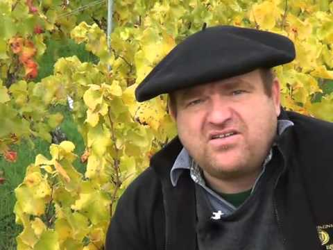 Soil Management In Champagne - Part II