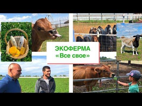 """ЭкоФерма """"Все свое"""". Мясные козы, овцы , джерсийские  коровы......"""