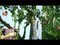 Pohon Berbuah Gadis BUGlL ini Bikin Gempar Dunia.! Bukti KUASA TUHAN.!? 5 Buah & Bunga Aneh.!!