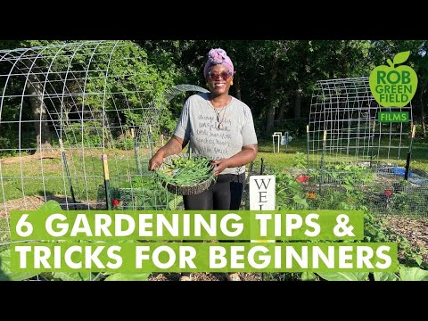 6 Gardening Tips and Trick for Beginners