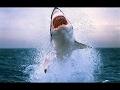 NATGEO Animals Australia S Deadliest Shark Coast Nat Geo WILD mp3