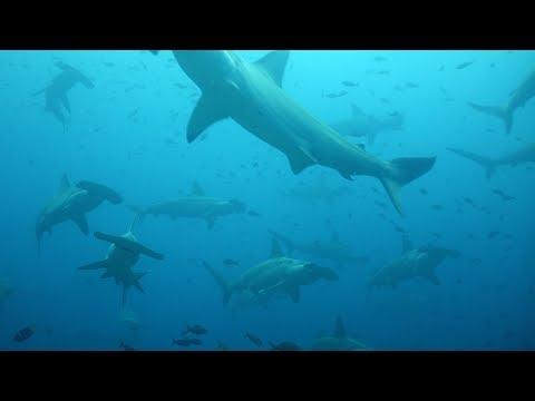 Best Dive Ever - Galapagos Islands Diving September 2017