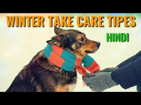 How to Take Care of  Dog in Winter | In Hindi | dog care in winter