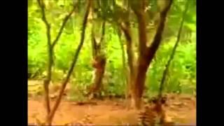 Самые смешные видеоприколы про обезьян