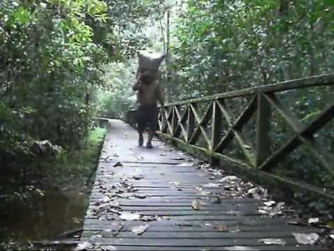 Niah Caves in Miri, Sarawak, Borneo Adventure