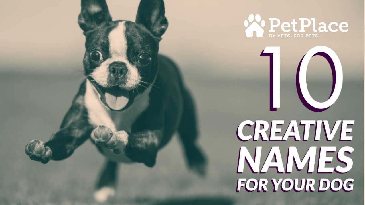 Uncommon Dog Names Petplace