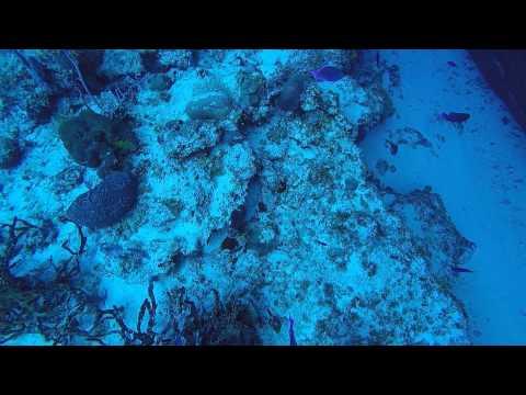 POV Diving - Shipwreck - Cozumel - México