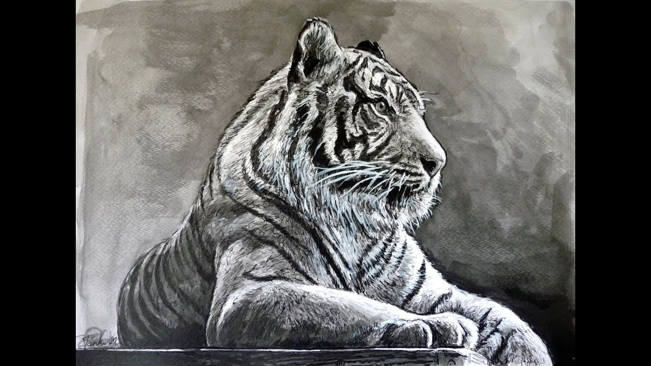 tiger drawing with pen and ink time lapse youtube