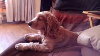 Koera ulgumine