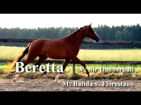 Beretta *2012 / Bundeschampionesse 2015 / (Verkauft!)