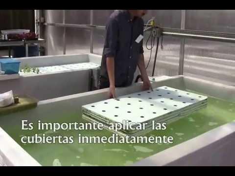 Producción de hortalizas en sistemas flotantes