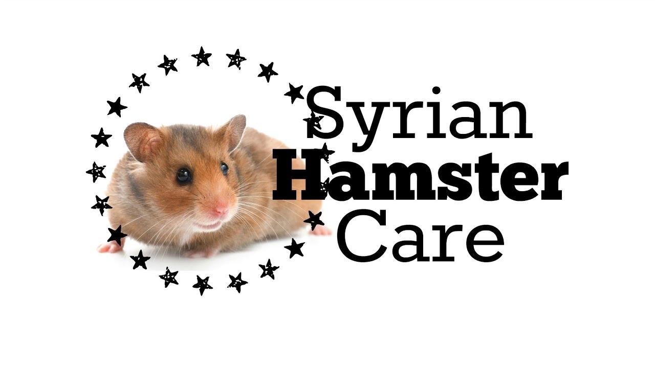 Hamster Care - Hamster Munchies