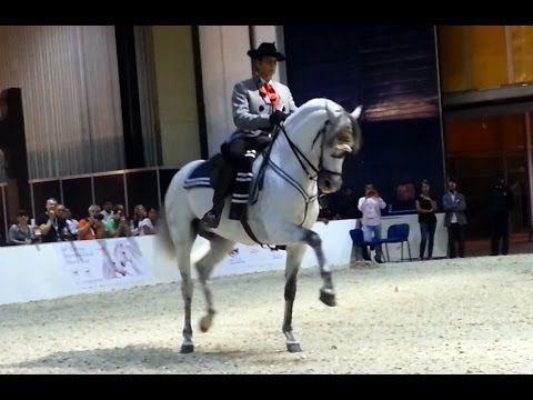 Andalusian Dancing Horse at DIAHS 2014